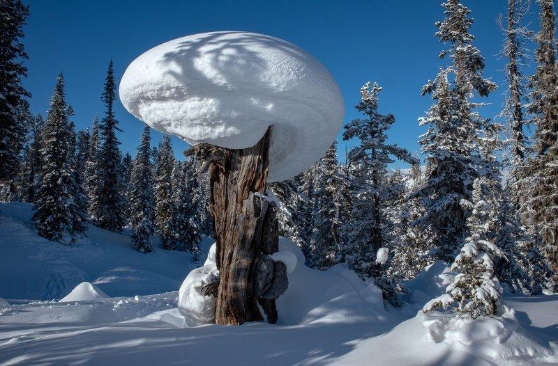 ергаки, пень, зима, снег, тайга, кедры, фигура, шапка, гриб Дозорныйphoto preview