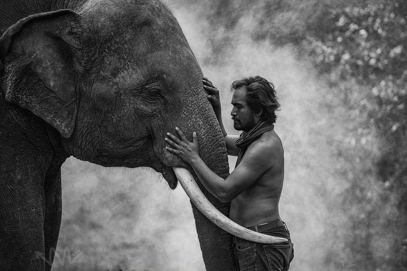 elephant,Thai,Thailand,BW,Animal,Portrait,man,mahout, Young Mahout and Elephantphoto preview