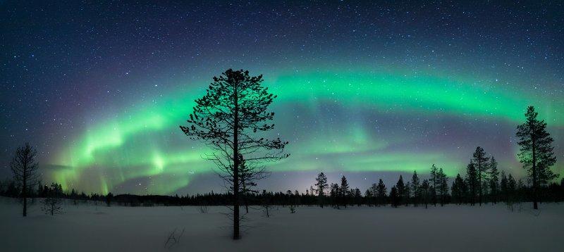 северное сияние,север,териберка,мурманск,ночь,звезды,лес,снег,зима,аврора,фототур,россия Сияние севераphoto preview
