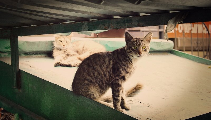 животное, животные, кот, коты, кошка, кошки street bumsphoto preview