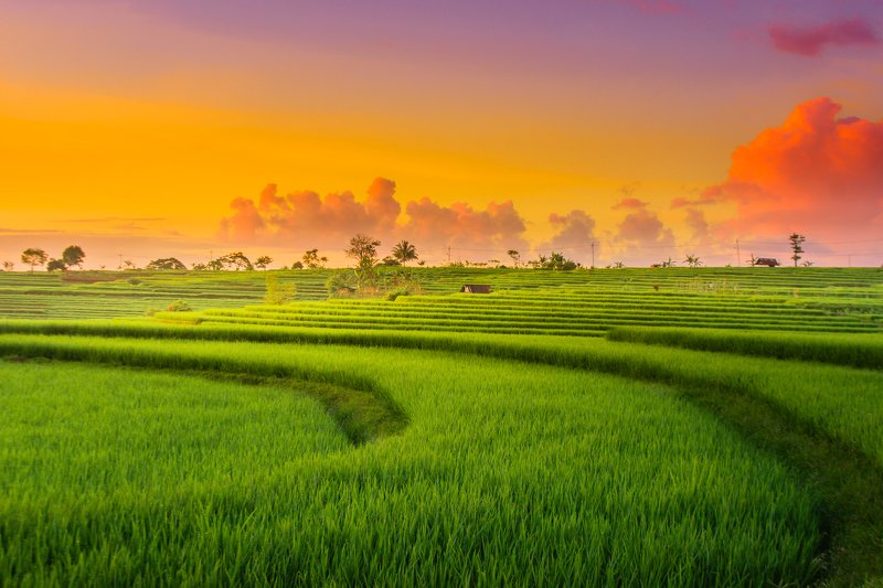 #nature #landscape #indonesia #asia #terace #paddy fields #mountain #sunset sunset at paddy fields in north bengkulu indonesiaphoto preview