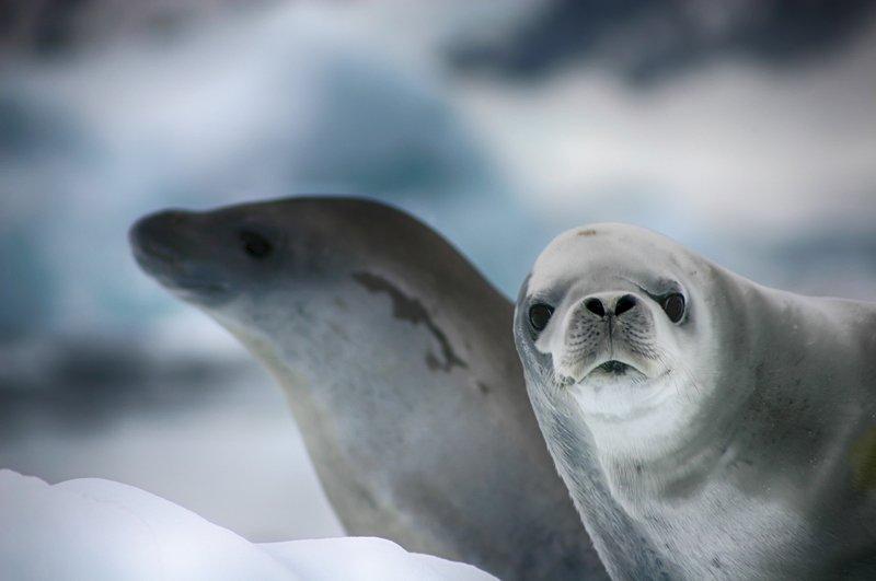 Антарктида 46photo preview