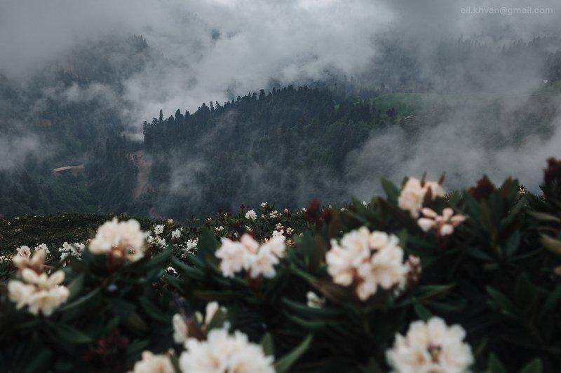 Весна в горахphoto preview