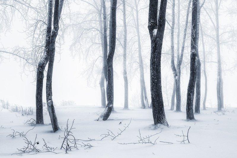зима иней туман холод мороз снег деревья Без звука, без дыханьяphoto preview