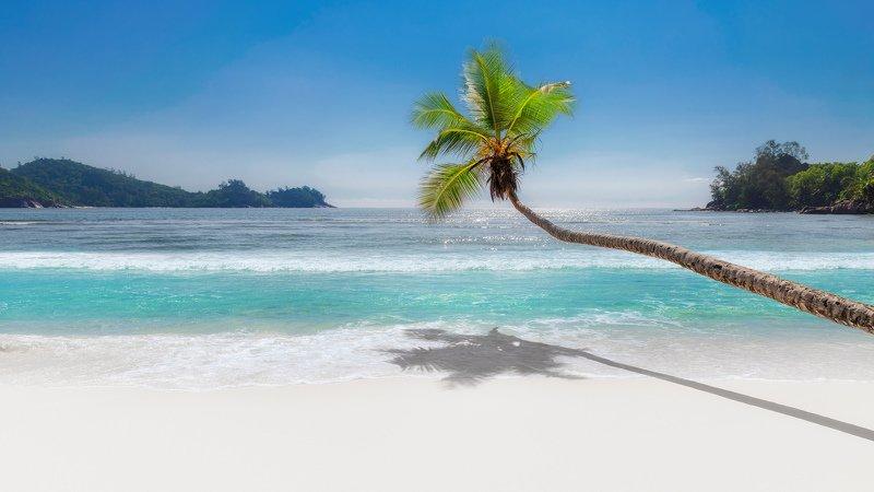 beach, palm, caribbean, paradise, island, sand, пляж, пальма Paradise beachphoto preview