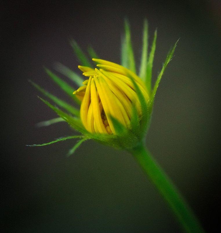 сочи, природа, цветы, весна Веснаphoto preview
