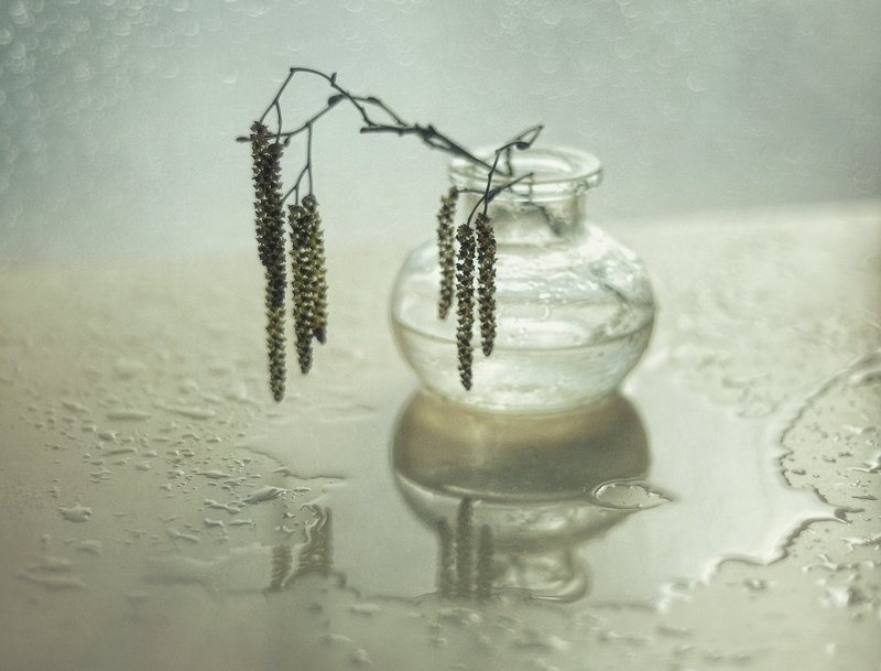натюрморт,весна,сережки,ольха ...после дождя...photo preview