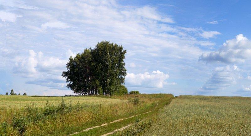 Костромская область , лето 2013photo preview