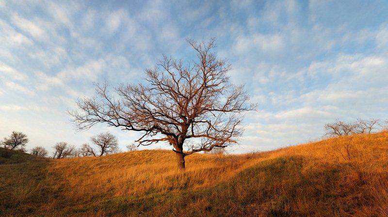 весна, вечер, дерево, дуб, запорожье, пейзаж, хортица ***photo preview