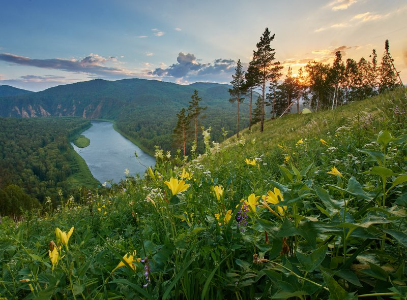 рассвет , река, цветы Летние цветыphoto preview