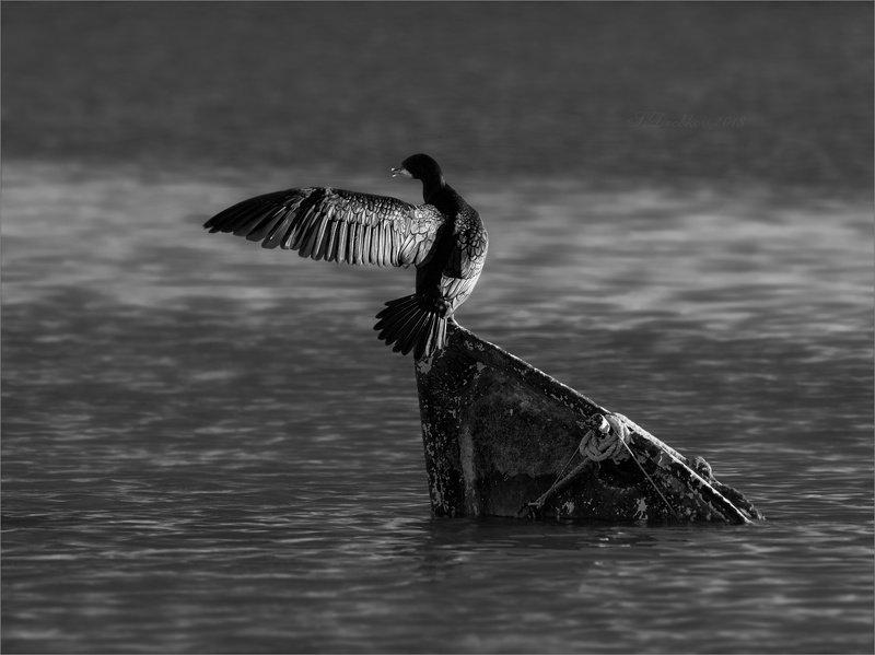 баклан, лодка, вода, закат, фауна Проход запрещёнphoto preview