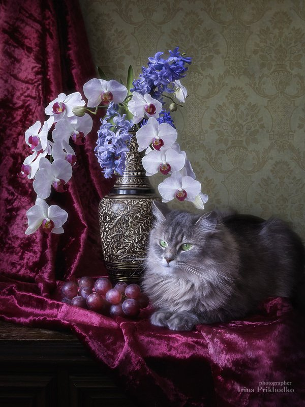 Масяня в цветочной композицииphoto preview