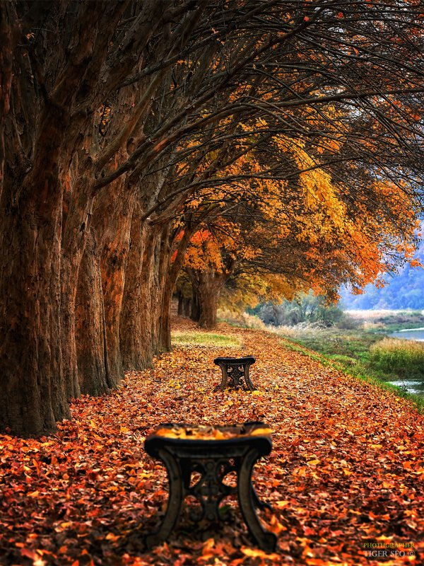 trees bench leaf autumn morning colors Korea foliage  Emptyphoto preview