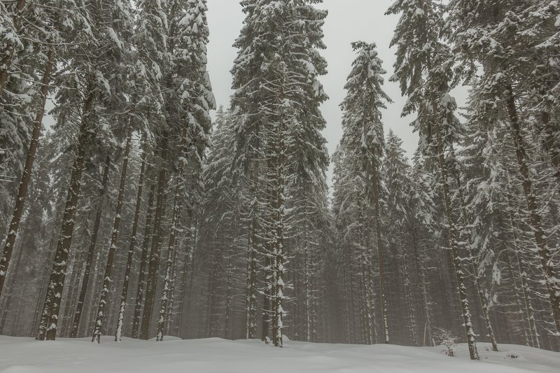 landscape winter mountains snow fog photography photo canvas wallpaper nature trees frame view  Winter in the Vladeasa Mountains. photo preview