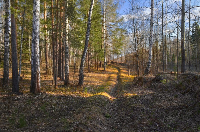лес, тёплый вечер, солнечный свет, дорога, весна Начало маяphoto preview