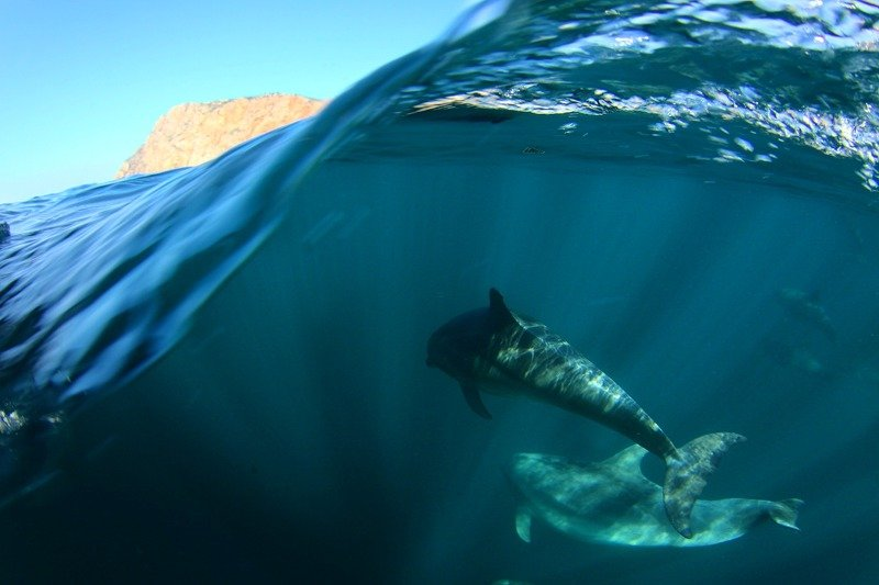 черное море, афалины, дельфины,  В своей стихииphoto preview