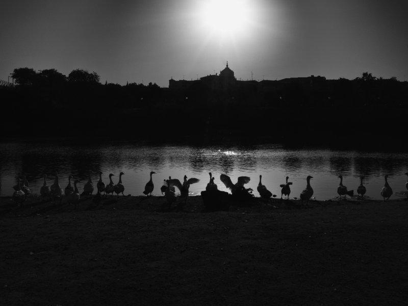 Spain, Toledo, Monochrome, Black and white, Birds, Sunset A companyphoto preview