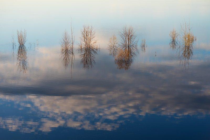 Дерева на небесахphoto preview