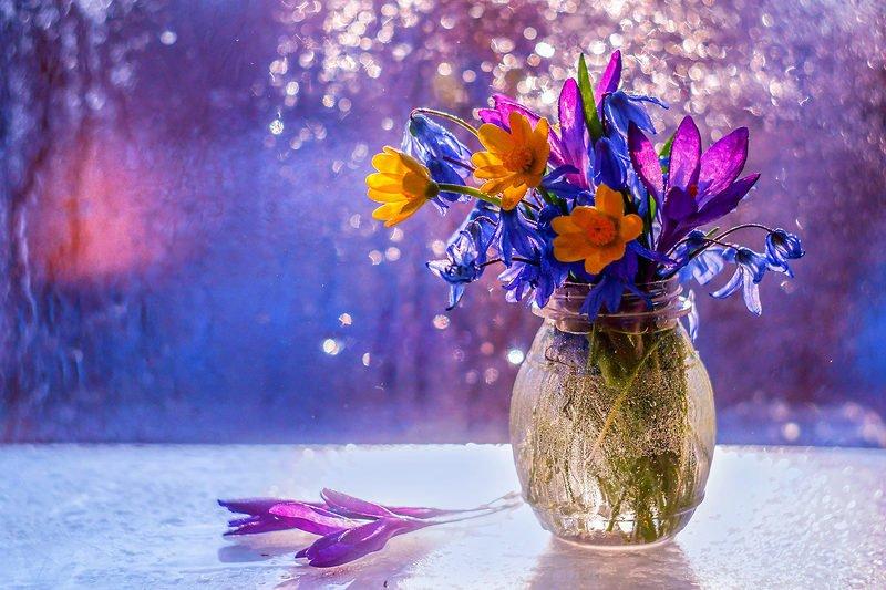 Весенний Привет...photo preview