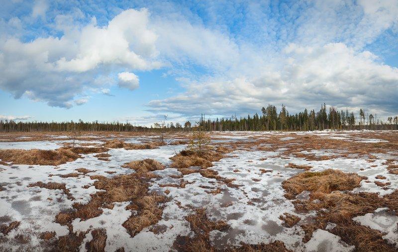 пейзажи ленинградской области, весеннее болото, болотный календарь \