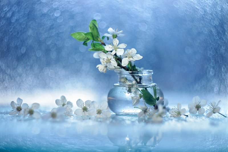 kwiaty,białe,wiosna,flowers,spring ...photo preview