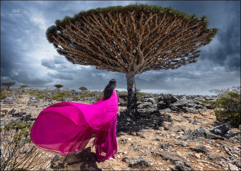 Йемен, Сокотра, пейзаж Драконовые деревья острова Сокотраphoto preview