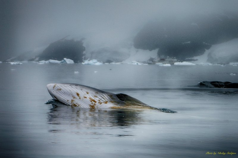 Антарктида 49photo preview