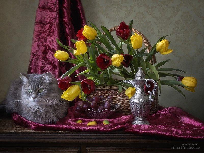 натюрморт, весна, тюльпаны, букет, корзина, кошка Масяня Весенний светофорphoto preview