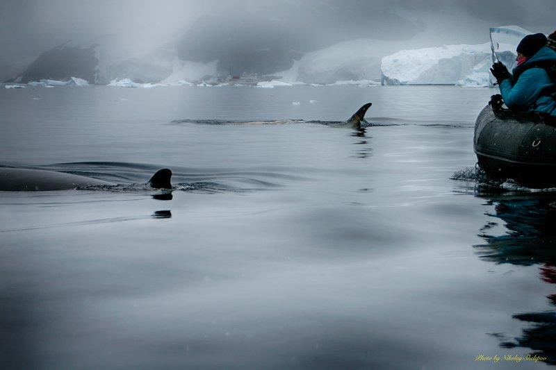 Антарктида 50. Так мы наблюдали за китамиphoto preview