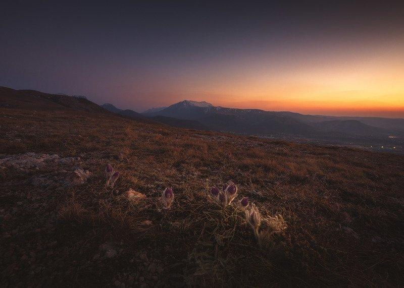 Сон-трава в последних лучах заката. Долгоруковская яйла, Крым.photo preview