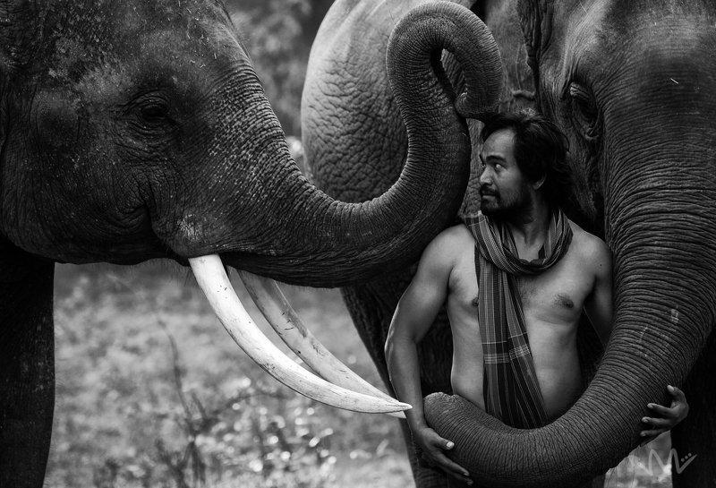 portriat,animal,elephant,man,mahout,Thailand,wildlife,male,Thai, Good Friend !!! photo preview