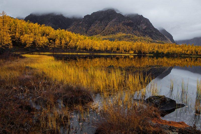 забайкалье  кодарский хребет осень горы лиственница НАСТРОЕНИЕ - ОСЕНЬ.photo preview