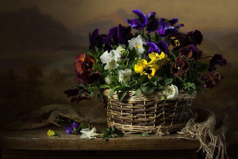 натюрморт с анютиными глазками,виолы,весна,цветы,художественное фото,искусство. photo preview