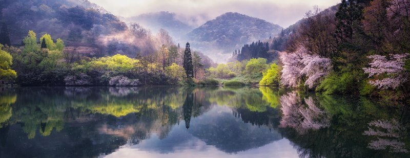 mountain trees flower water lake reflection fog spring sunlight morning Korea spring sunlightphoto preview