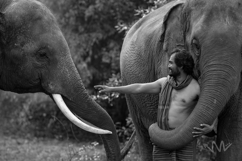 portrait,elephant,animal,man,Thai,animal,asia, Enjoyphoto preview