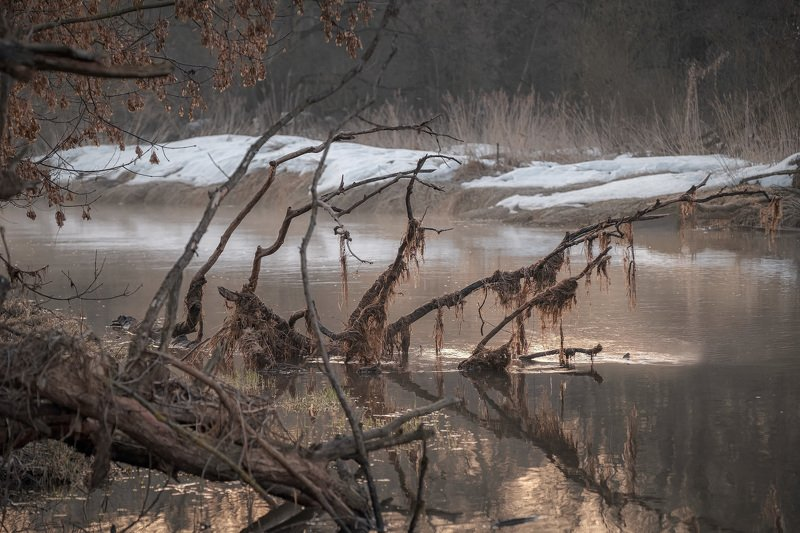 истра, река, вода, водяной, коряга, отражения, март, тепло, рассвет, солнце, деревья, ветки, туман Водяной проснулсяphoto preview