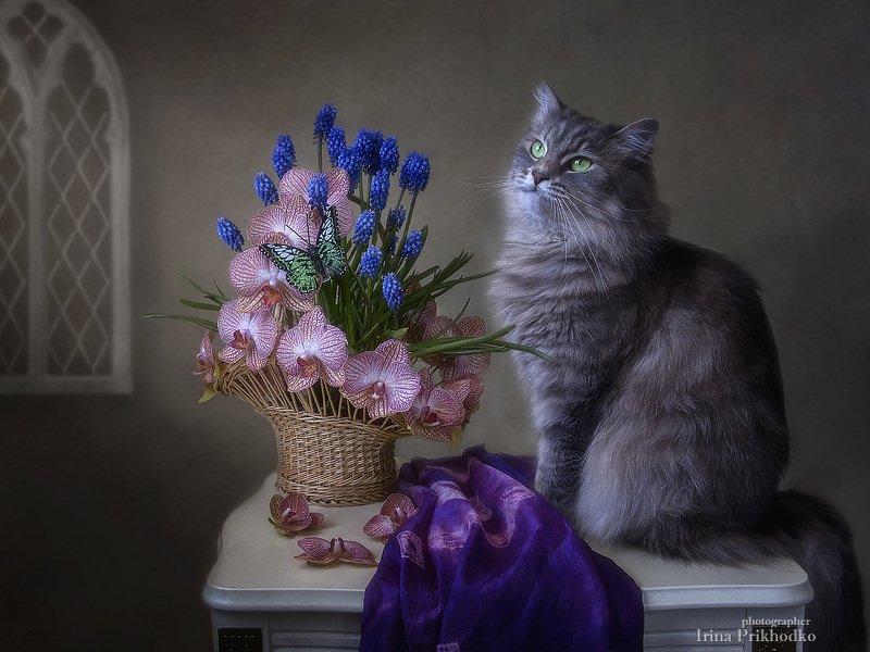 натюрморт, цветочная корзина, орхидеи, мускари, весна, кошка Масяня Молодая аристократкаphoto preview