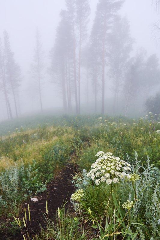 рассвет, цветы, туман Мистический туманphoto preview