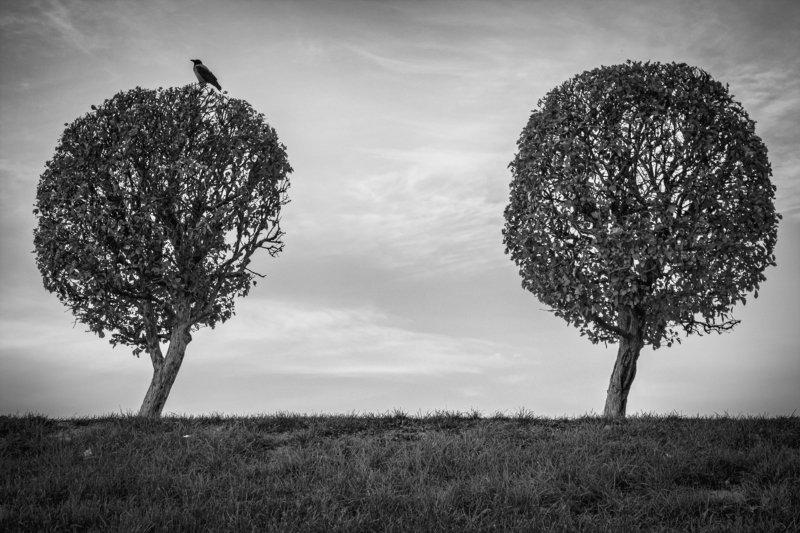 петергоф, петродворец, ворона, дерево, деревья, птица guard gatephoto preview