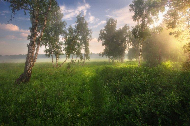 лето, березы, природа, урал Всем летаphoto preview