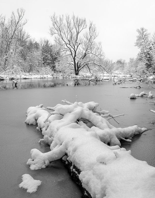 snow, ice, river, winter, trees, water, снег, лёд, река, зима, деревья, вода The last snowfallphoto preview