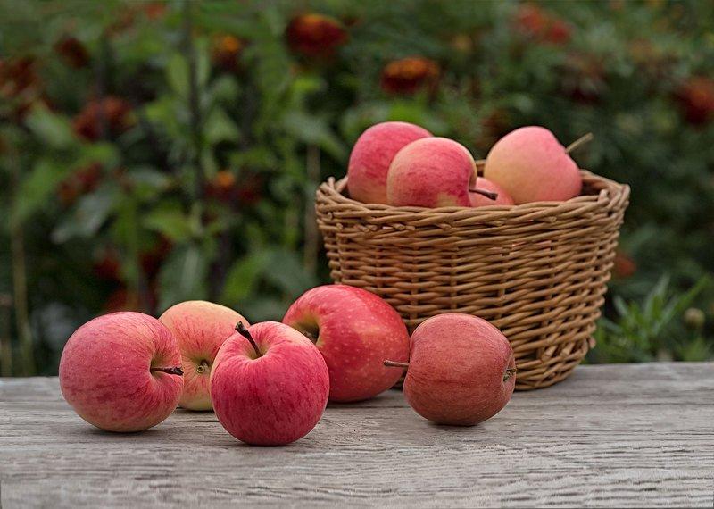 натюрморт, яблоки, корзинка Яблокиphoto preview
