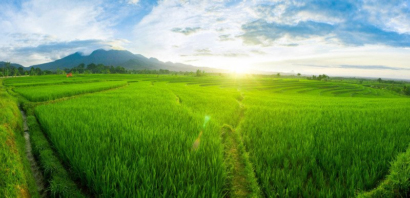 rice, field, paddy, indonesia, landscape, vietnam, terraced, green, farming, nature, kerala, farm, food, asia, fields, beautiful, mountain, rural, travel, plant, agriculture, valley, thailand, hill, pattern, water, outdoor, terrace, grass, tourism, asian, panoramic view of beautiful scenery with a 180 degree anglephoto preview