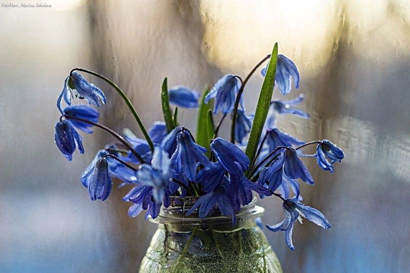 Первоцветы.photo preview