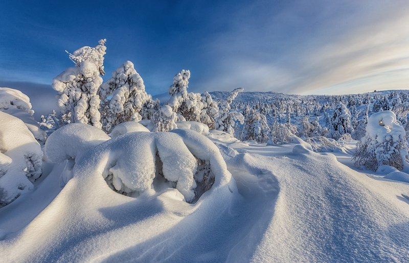 снег, горы, ели, кандалакша. ...photo preview
