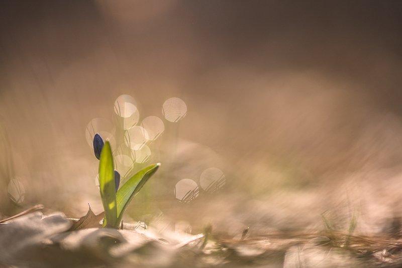 пролески, первоцветы, свет, цвет,март, весна, позитив, геннадий мещеряков, воронеж, Играя солнечными зайчиками...photo preview