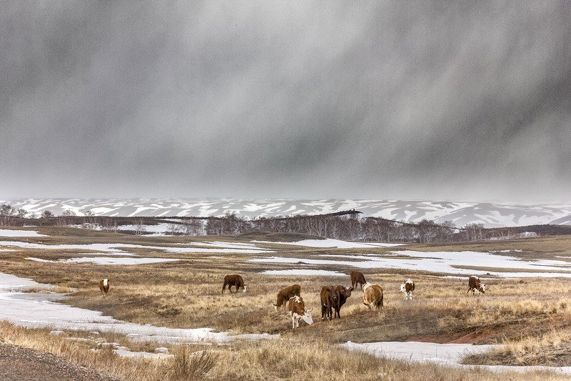 южный, урал, долгие горы, орск, новотроицк В весеннем пространстве...photo preview