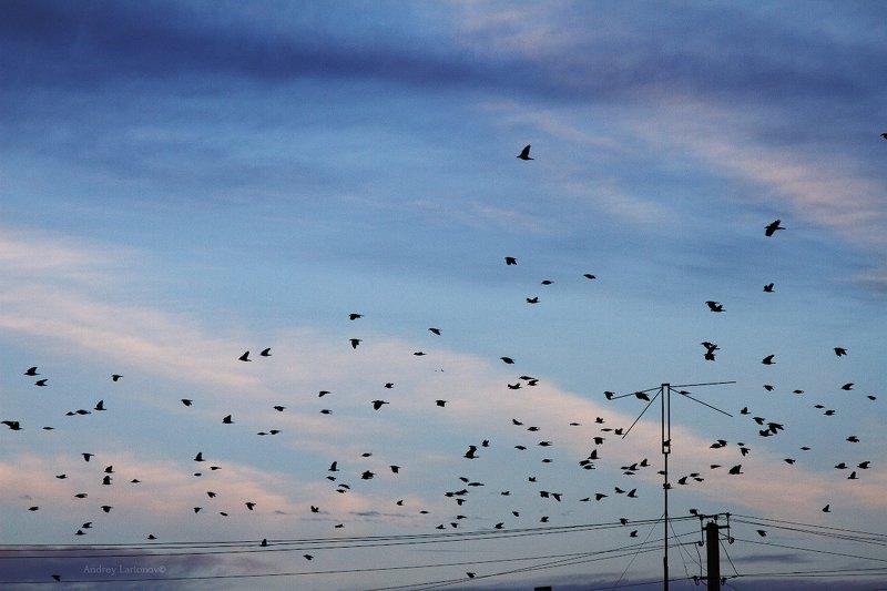 осень, небо, птицы Небо осениphoto preview