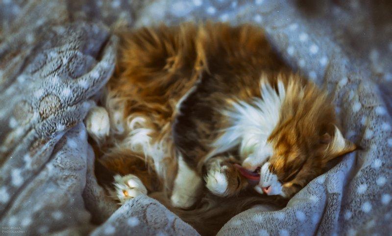 животные, питомцы, кошка, animals, pets, cat, Блэрphoto preview