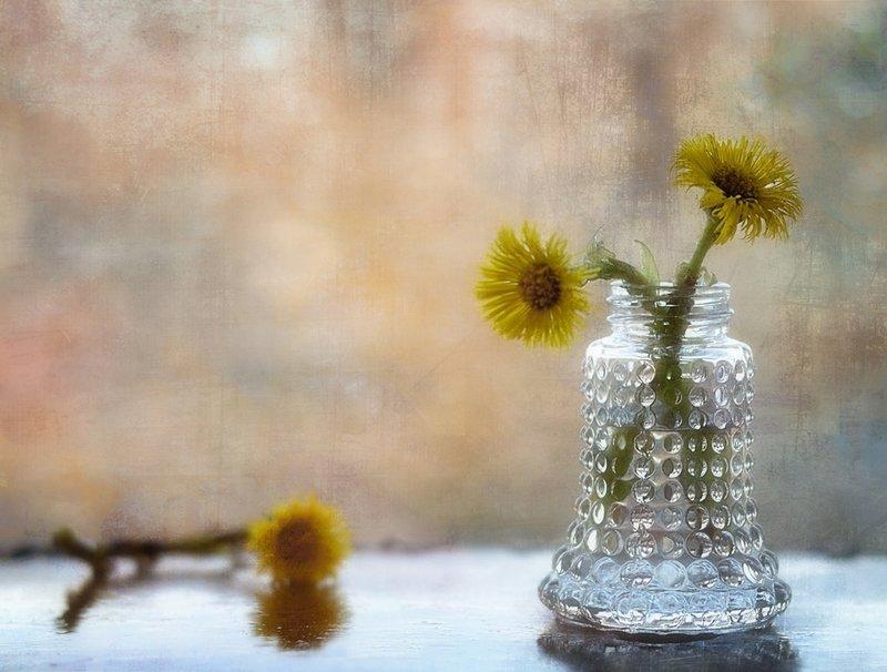 натюрморт,первоцветы,мать-мачеха,весна,цветы первые цветы...photo preview